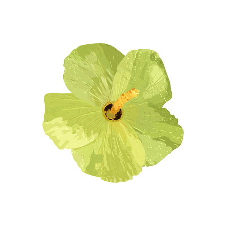 Isolated yellow Hibiscus tropical plant. Collection with hand dr Illustration
