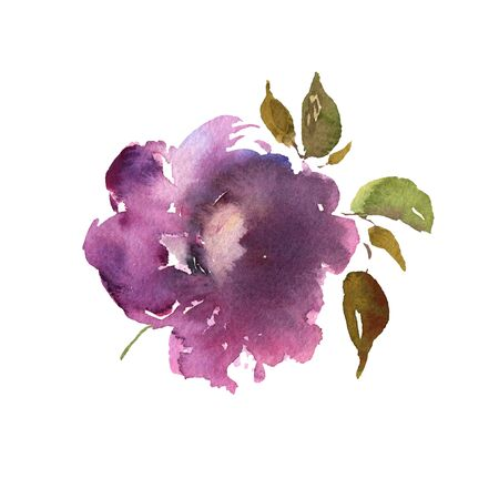 Watercolor flower hand drawn colorful beautiful purple isolated and blossom plant for cards prints and invitation