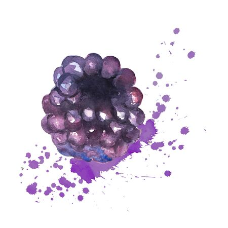 blackberry splashes with watercolors on a white background. Healthy drink. Bright juicy color. Sweet berry. Vector.