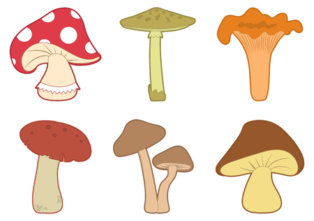 Mushrooms vector set.