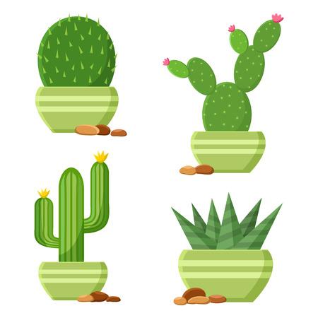 Colored flowering cactus set in flowerpots with pebbles cartoon houseplants vector illustration