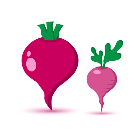 Beet and radish colored vegetable with shadow vector illustration