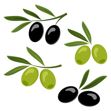 Colored set of black and green olives Vector illustration 일러스트
