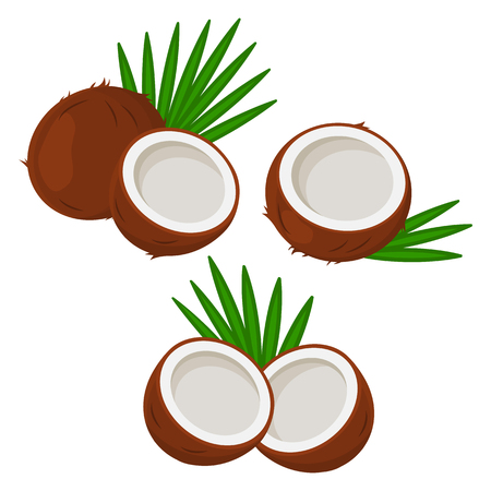 Set of coconut with leaves. Vector illustration