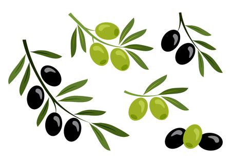 Set of black and green olives. Vector illustration Banque d'images - 123982930