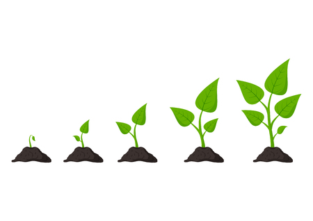 Gardening. Phases plant growing. Planting. Seeds sprout in ground. Infographic and evolution concept. Vector illustration Ilustração
