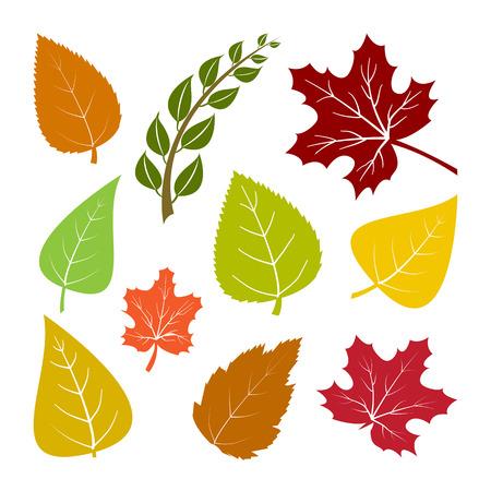 Conjunto de coloridas hojas de otoño. Ilustración vectorial