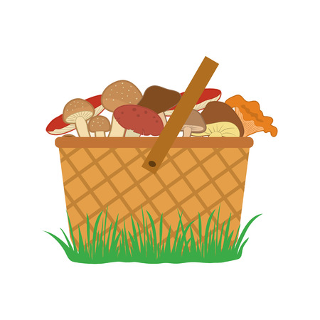 Basket of mushrooms on the grass, colored vector illustration Vettoriali