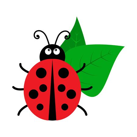 Bright ladybug icon. Vector illustration