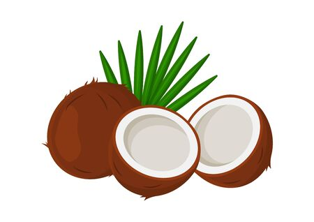 Tropical coconuts with leaves isolated on white background. Vector illustration