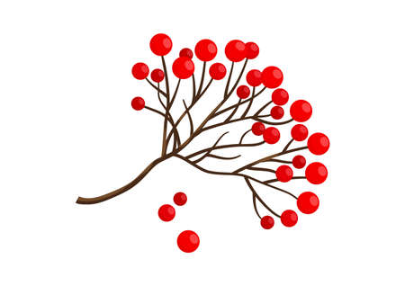 Red rowan berry branch icon, winter plant isolated on white background. Vector illustration
