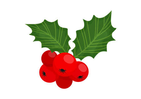 Holly berry vector icon Christmas symbol, holiday plant isolated on white background, winter illustration Vectores
