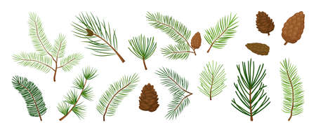 Christmas tree branches, fir and pine cones, evergreen vector set, holiday decoration, winter symbols isolated on white background. Nature illustration