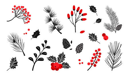 Christmas vector plants, holly berry, christmas tree, pine, leaves branches, holiday decoration, winter symbols isolated on white background. Red and black colors. Vintage nature illustration