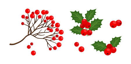 Holly berry and red rowan berry branch icon, vector Christmas symbols, holiday plants isolated on white background, winter nature illustration Illustration