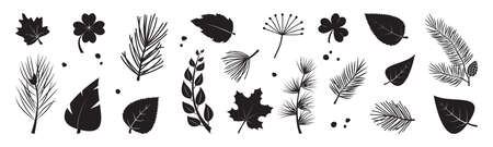 Leaf tree vector icon, plant black silhouettes, fir and pine cone, evergreen, leaves different shapes isolated on white background. Nature illustration