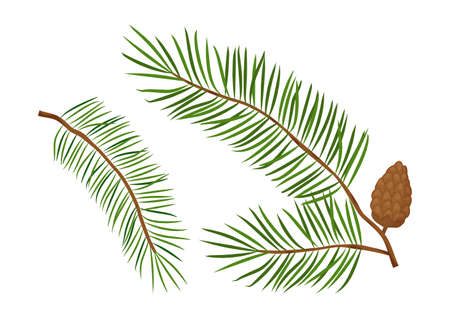 Christmas tree vector branches, fir and pine cones, evergreen set, holiday decoration, winter symbols isolated on white background. Nature illustration
