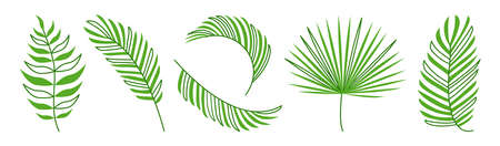Green palm leaf vector set, summer exotic plant isolated on white background. Nature illustration 矢量图像