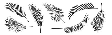 Palm leaf vector black silhouettes, summer branch plant jungle coconut tree, nature set icon isolated on white background. Tropic illustration