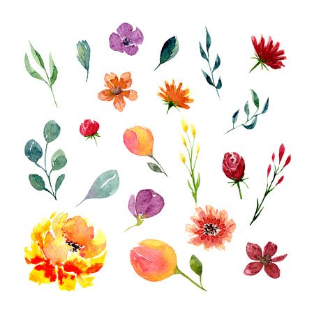 Set of watercolor flowers and leaves. Collection of natural hand drawn elements: foliage, branches and blossom for design on white background