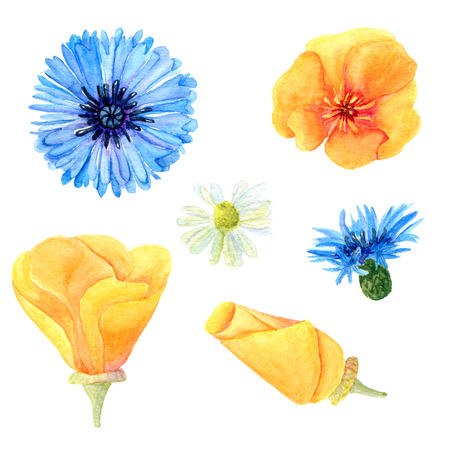 Set of watercolor summer meadow flowers. Collection of natural hand drawn rustic elements: poppies, cornflowers and chamomile for design on white background