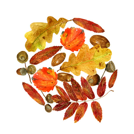 Watercolor pattern of autumn leaves and acorns. Bright fall round print with natural elements. Decorative hand drawn ornament for wrapping, wedding design or invitation cards on white background