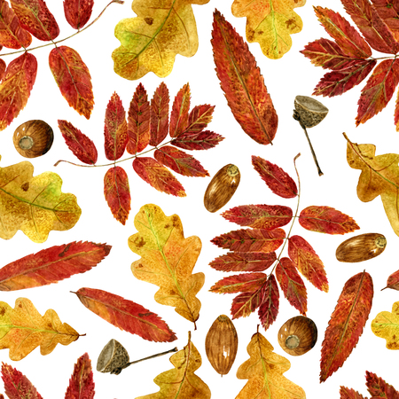 Seamless texture of watercolor fall oak, rowan leaves and acorns. Bright autumn print with natural elements. Pattern of decorative hand drawn ornament for wrapping, holidays design or invitation cards on white background Banco de Imagens