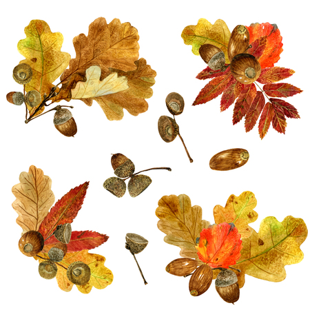 Set of watercolor fall leaves arrangements. Collection of natural hand drawn prints with autumn folliage and acorns. Bouquets of oak, rowan branches and aspen leaf on white background