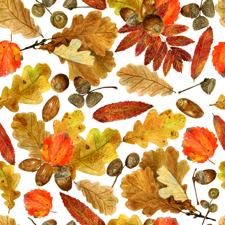 Seamless texture of watercolor fall oak, rowan, aspen leaves and acorns. Bright autumn print with natural elements. Pattern of decorative hand drawn ornament for wrapping, holidays design or invitation cards on white background