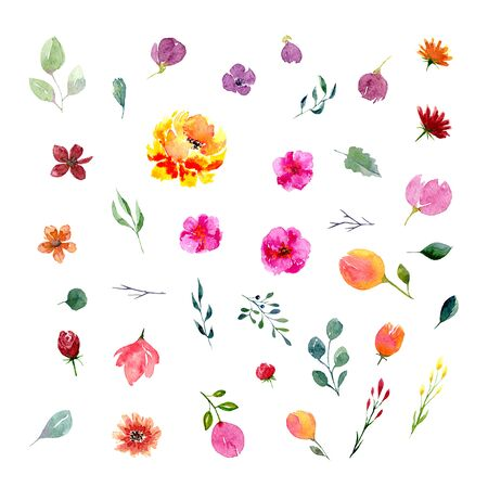 Big set of watercolor flowers and leaves. Collection of natural hand drawn elements: foliage, branches and blossom for design on white background