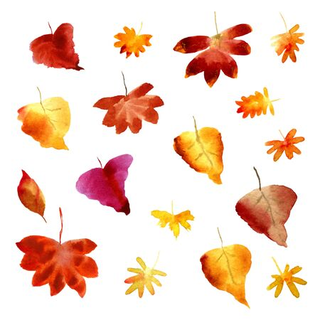 Set of watercolor fall leaves. Collection of natural hand drawn elements. Autumn foliage for design on white background Stok Fotoğraf