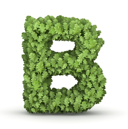 Letter B from fresh green oak grow leaves Stock Photo - 17907484
