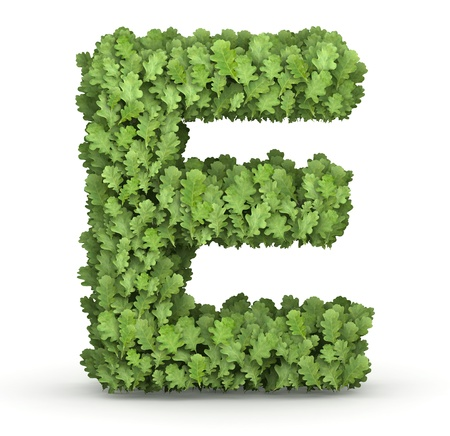 Letter E from fresh green oak grow leaves photo