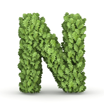 letter n: Letter N from fresh green oak grow leaves