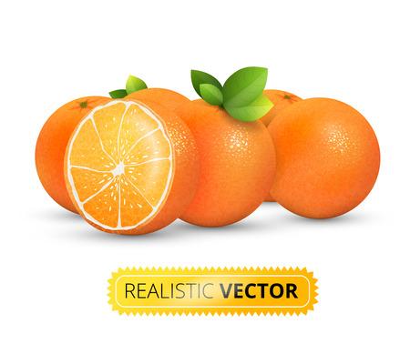 fruit orange: Ilustración vectorial Conjunto de varias naranjas brillantes frescas