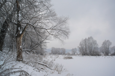 frozen winter: Winter  forest and lake. Snow covered trees and frozen water Stock Photo