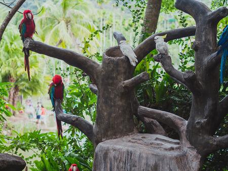 Parrots on tree Stok Fotoğraf