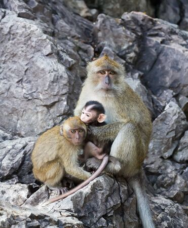 Family of monkeys - mother with two babies