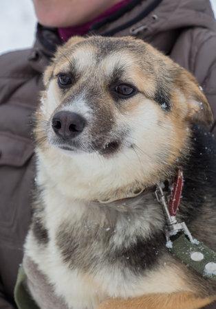 Cute mongrel homeless dog in an animal shelter Standard-Bild