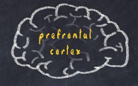 Drawing of human brain on chalkboard with inscription prefrontal cortex.