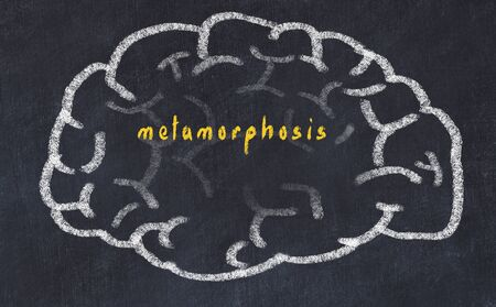 Drawind of human brain on chalkboard with inscription metamorphosis.