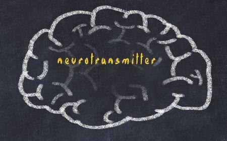 Drawind of human brain on chalkboard with inscription neurotransmitter.