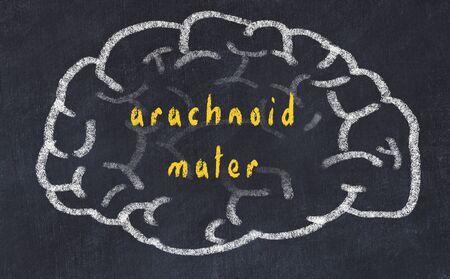 Drawind of human brain on chalkboard with inscription arachnoid mater. Stok Fotoğraf