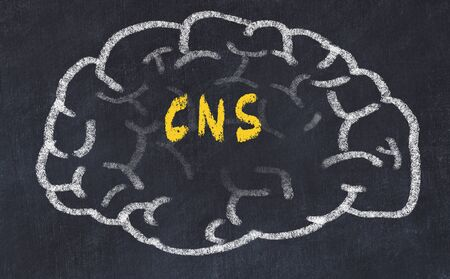 Drawind of human brain on chalkboard with inscription CNS.