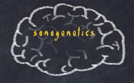 Drawing of human brain on chalkboard with inscription sonogenetics.