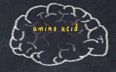 Drawing of human brain on chalkboard with inscription amino acid.