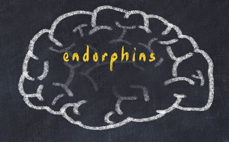 Drawing of human brain on chalkboard with inscription endorphins.
