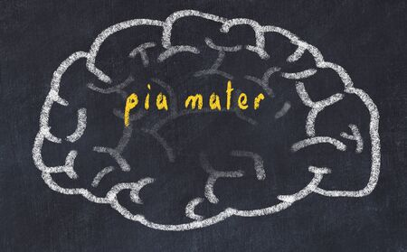 Drawing of human brain on chalkboard with inscription pia mater. Stock Photo