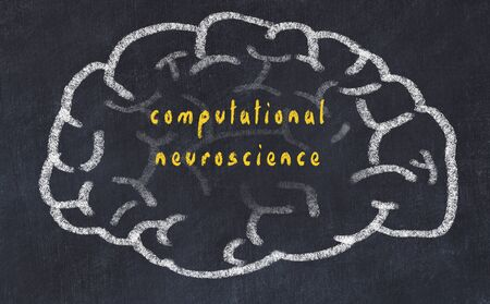 Drawing of human brain on chalkboard with inscription computational neuroscience.