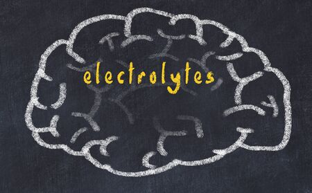 Drawing of human brain on chalkboard with inscription electrolytes.